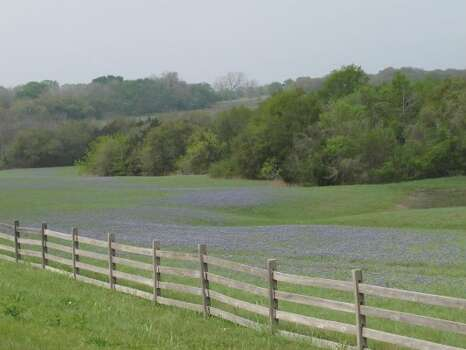 bluebonnets near old baylor park on 3-29-/11. Photos by Kathy Huber