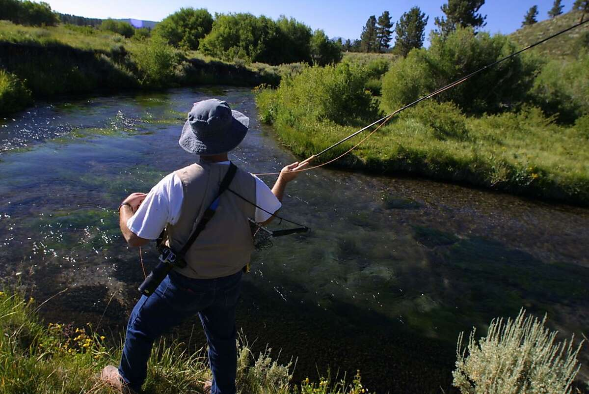 MAMMOTHg-C-19JUL01-SN-KW - A returning guest since, 1994, Joe Davidson, of Culver City, California fly fishes for trout on Tim Alpers, trout farm and fly fishing retreat near Mammoth Lakes, California.