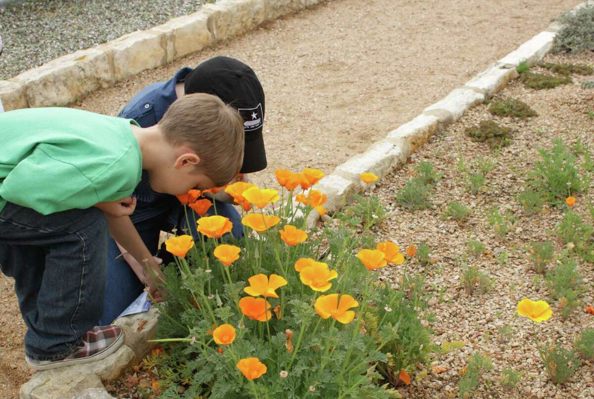 Nature's art attracts young admirers at the Lady Bird Johnson Wildflower Center in Austin.