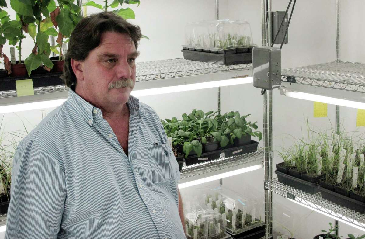 Plant pathologist Erik Mirkov is shown at the Texas AgriLife Research and Extension Center in Weslaco, Texas on Wednesday, March 28, 2012. Mirkov has moved spinach genes into citrus trees that testing has shown the genetically enhanced citrus trees are immune to citrus greening, a disease that has ravaged the industry.
