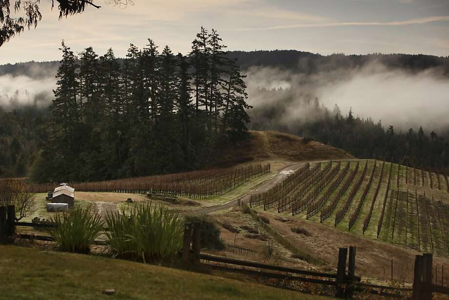 The cool and often foggy areas of the Sonoma coast can be a great place to grow Syrah. Photo: Craig Lee, Special To The Chronicle 2009