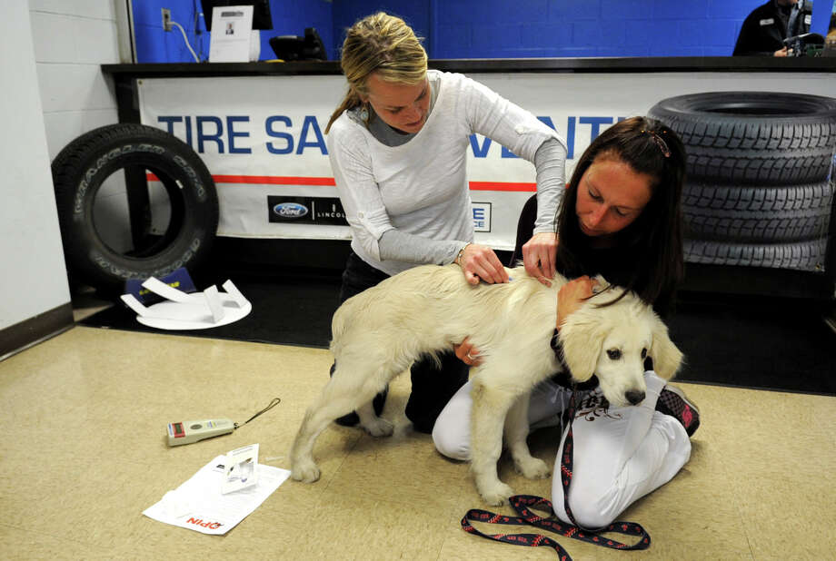 Veterinarian Kim MacDonald, left, and Veterinary Assistant Camilla Gronlund, right, give Teddy, a 4-month-old Golden Retreiver, a micro-chip during a free clinic by Outreach to Pets in Need at Stamfor Ford-Lincoln on Saturday, April 7, 2012. Photo: Lindsay Niegelberg / Stamford Advocate