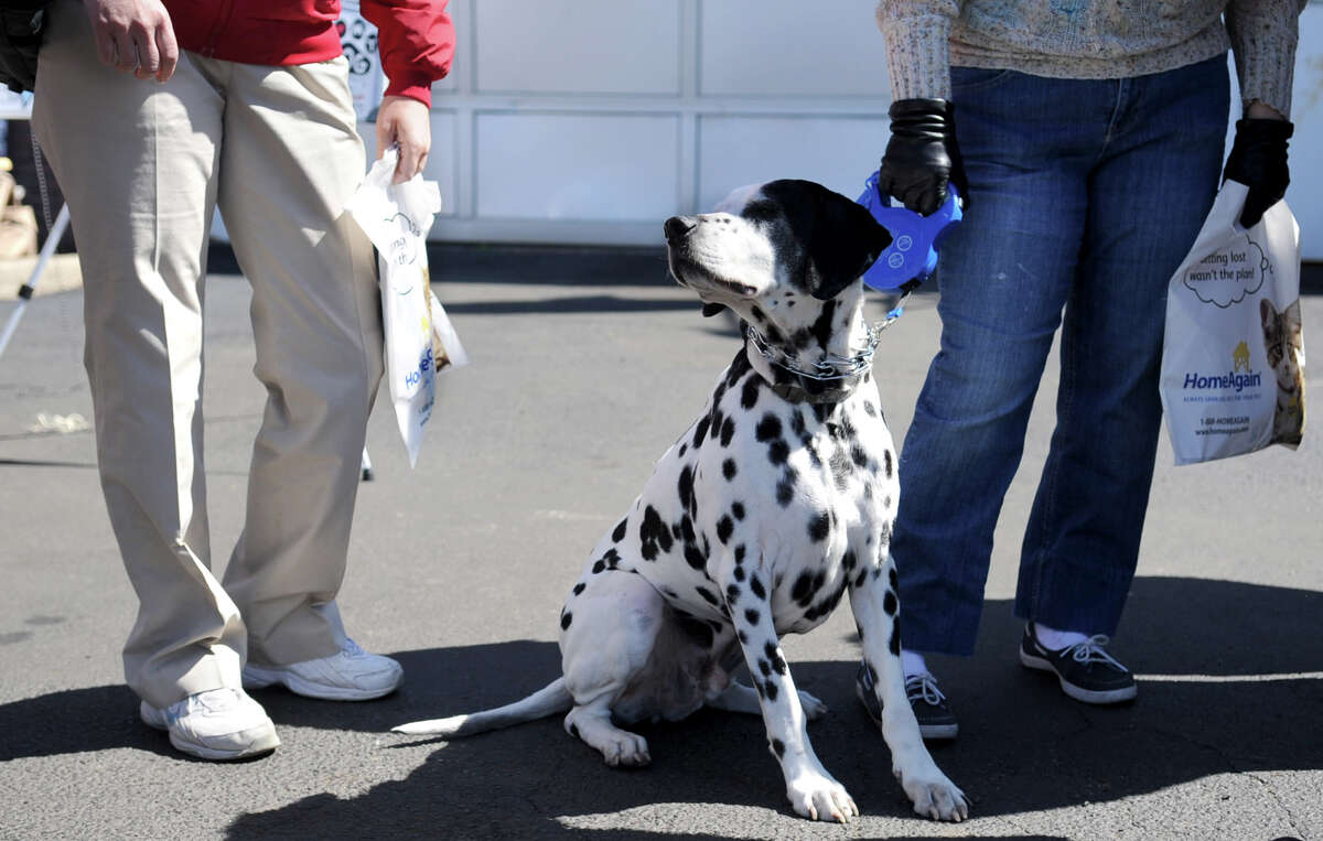 Hobbes and his owner, Barbara Karp, wait in line during a free micro-chip clinic by Outreach to Pets in Need at Stamfor Ford-Lincoln on Saturday, April 7, 2012.