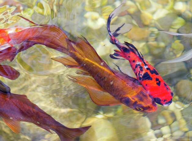 1000 images about koi fish on pinterest for Artificial koi fish
