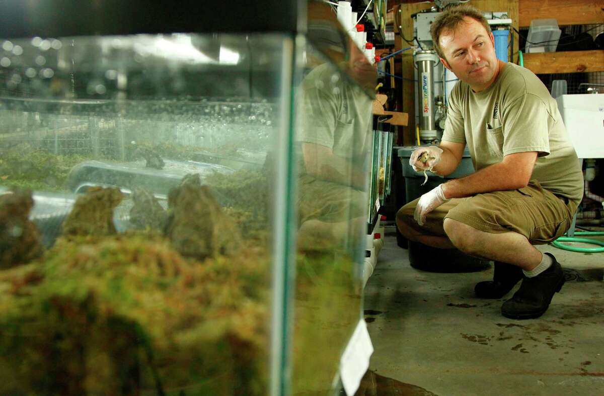 Biologist Paul Crump, amphibian conservation manager at the Houston Zoo, is looking for landowners willing to allow the program to release Houston toads on their property in an effort to save the species.