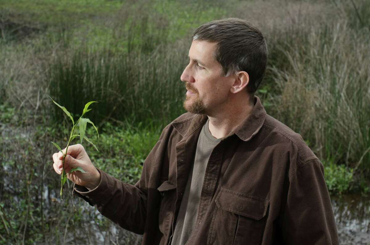 (For the Chronicle/Gary Fountain, February 25, 2012) Dr. Mark Vorderbruggen holding smartweed at the Spring Creek Greenway Nature Center.