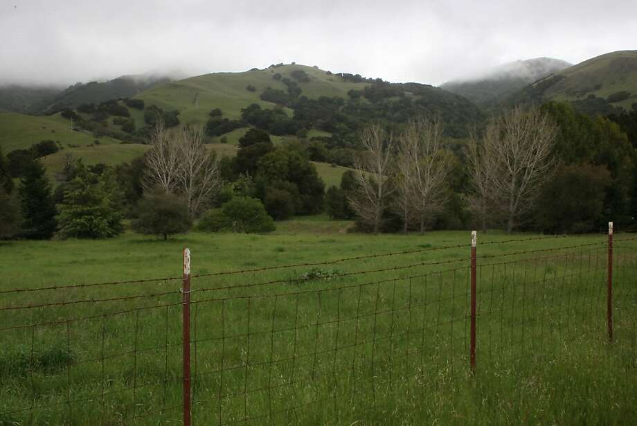 George Lucas' holdings in Marin County include historic Grady Ranch in San Rafael, just past these cypress trees, which he was blocked from developing. Photo: Liz Hafalia, The Chronicle