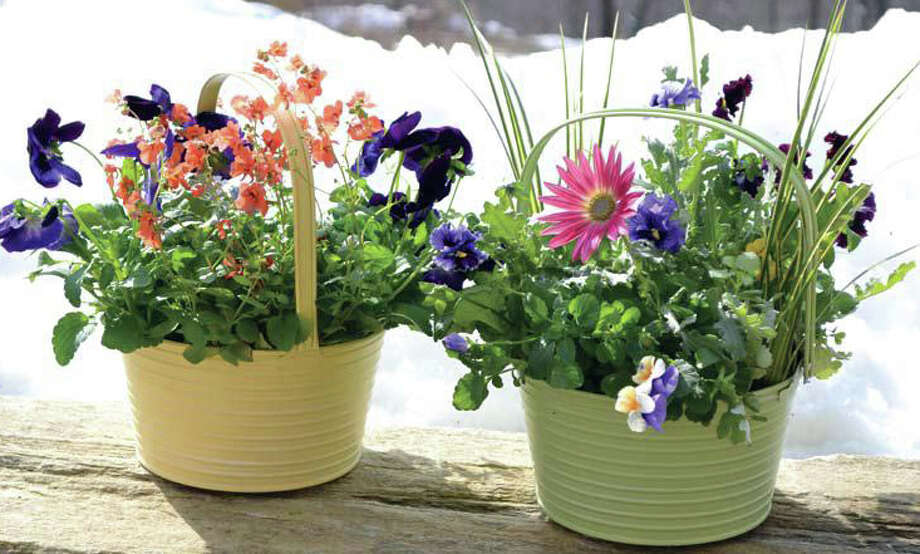 Nielsens Florist welcomes Heather Stephenson from Beds & Borders April 15. She will discuss cold weather plantings and how to combine annuals, bulbs and perennials to create containers. Photo: Contributed Photo