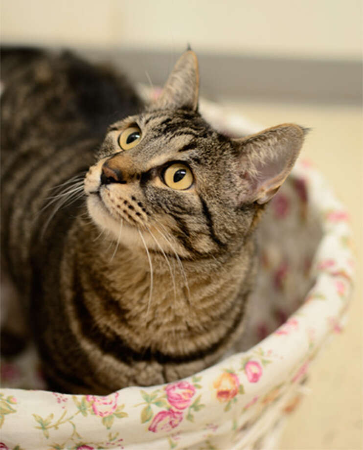 In honor of June