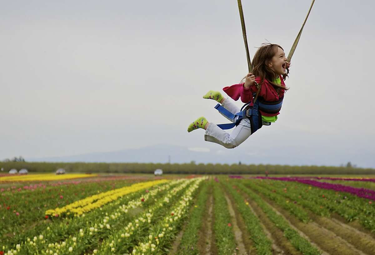 Olivia Bellin, 4, of Salem, Ore., bounces on a ride during an annual trip woth her mother to the Wooden Shoe Tulip Farm near Woodburn, Ore., Tuesday April 10, 2012. The farm is open through April 30, 2012 and features over 40 acres of flowers, rides, food and festivities. (AP Photo/Thomas Boyd/The Oregonian)MAGS OUT