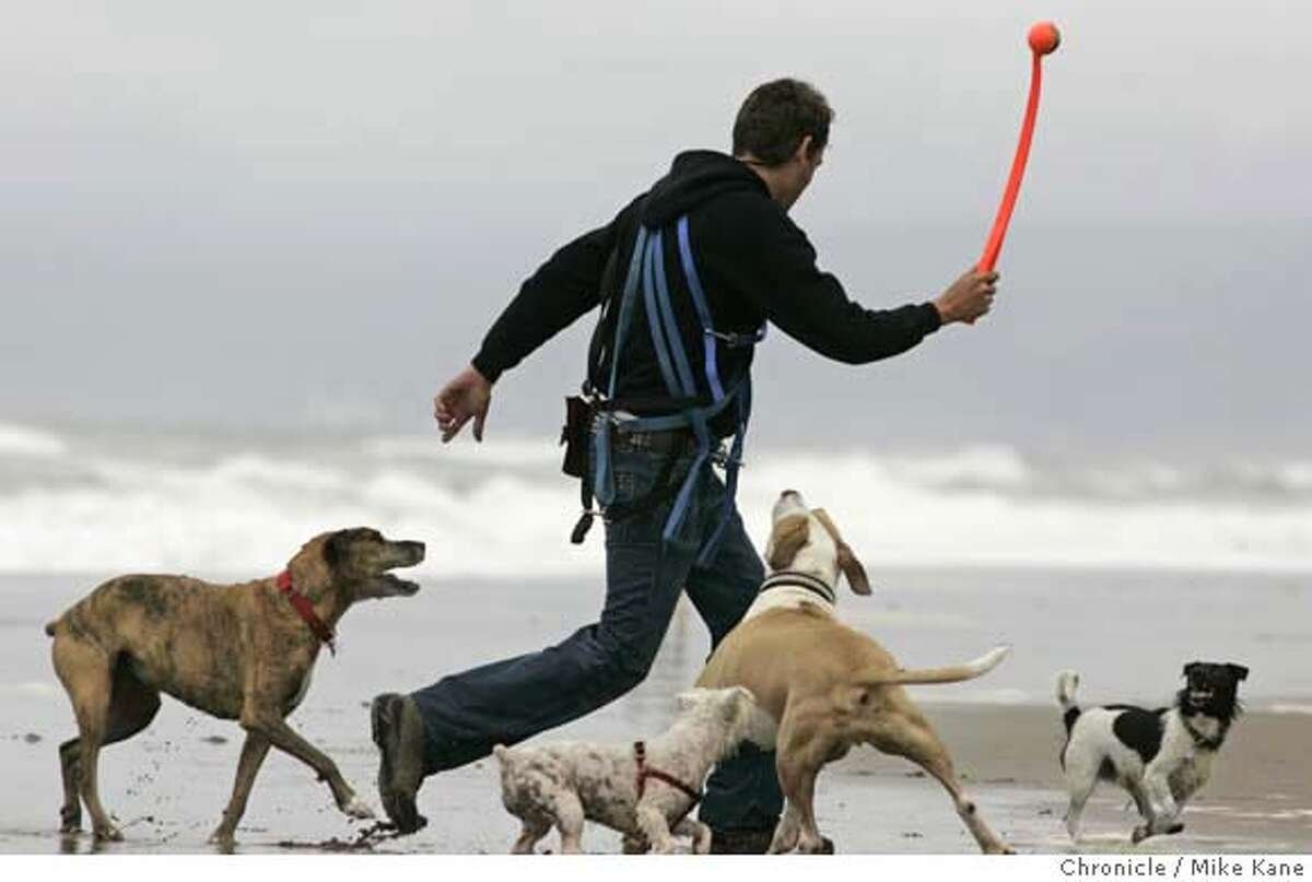 pet10_spending_ph2.JPG Professional dog walker David Wichman plays with dogs on Fort Funston Beach. The American Pet Products Manufacturers Association said that Americans will spend $40 billion on their pets this year. The improved quality of life for pets extend to how Americans care for them in our absence. It estimates that Americans will spend $2.9 billion a year on grooming, daycare and boarding. Mike Kane / The Chronicle MANDATORY CREDIT FOR PHOTOG AND SAN FRANCISCO CHRONICLE/NO SALES-MAGS OUT