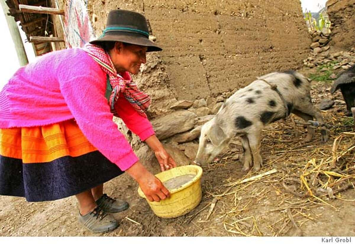 Sebastiana Ore Meza used her micro-loan to purchase three pigs, which she will later sell in a market to make a profit. Sebastiana lives above 12,000 feet in the Andean Mountains in the village of Atahuarco. Photo credit: Karl Grobl for Freedom from Hunger � 2007 Name: Sebastiana Ore Meza First Loan Amount: $64 What it went for: Three pigs Where she lives: Atahuarco, Peru