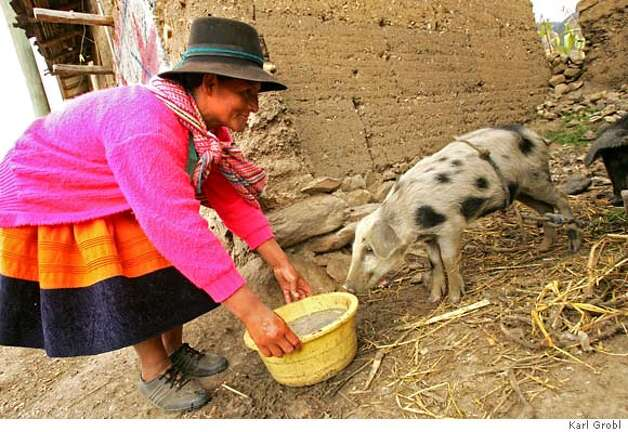 Sebastiana Ore Meza used her micro-loan to purchase three pigs, which she will later sell in a market to make a profit. Sebastiana lives above 12,000 feet in the Andean Mountains in the village of Atahuarco. Photo credit: Karl Grobl for Freedom from Hunger � 2007 Name: Sebastiana Ore Meza First Loan Amount: $64 What it went for: Three pigs Where she lives: Atahuarco, Peru Photo: Www.KarlGrobl.com