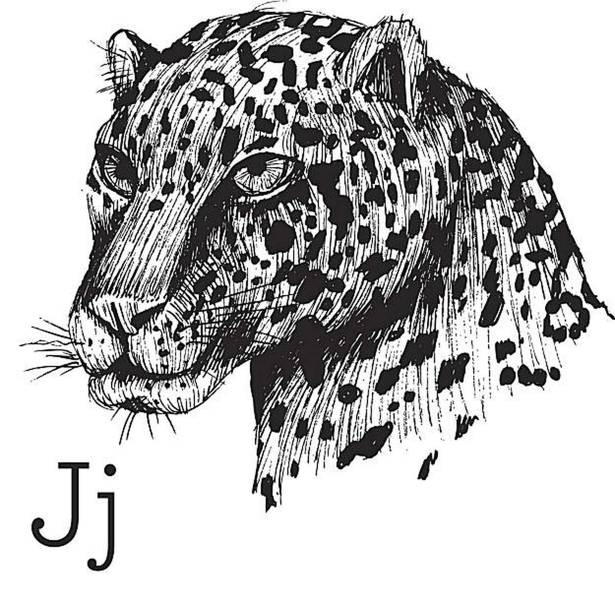 This illustration of a jaguar, that is extinct in the United States, is from a book called