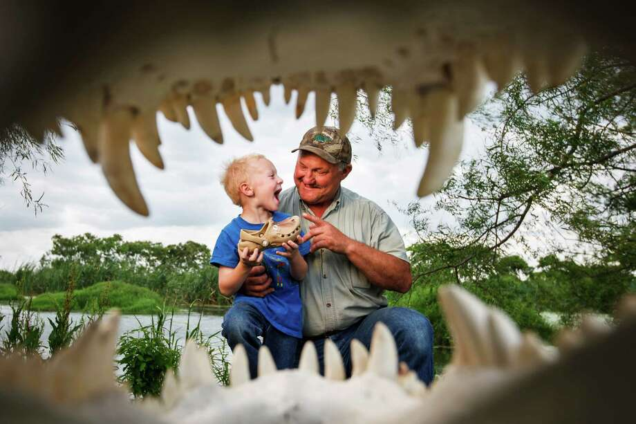 "Larry Janik touches his grandson Hunter Janik's, 6, alligator shoe as they are seen through an alligator skull from a 13ft-4in 1200lb alligator at Janik Alligators in El Campo. Larry Janik is a veteran gator wrangler, the guy people call when a gator is found in a pond or on the freeway.  ""Handling alligators is my golf game, it's what I love to do,"" Janik said.  I do it for the excitement.  It's a way to make money and do something I love."" Photo: Michael Paulsen, Houston Chronicle / © 2012 Houston Chronicle"