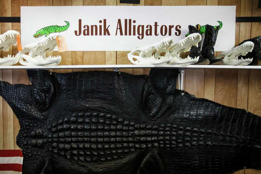 Alligator skulls sit on a shelf at Larry Janik's main office at Janik Alligators.
