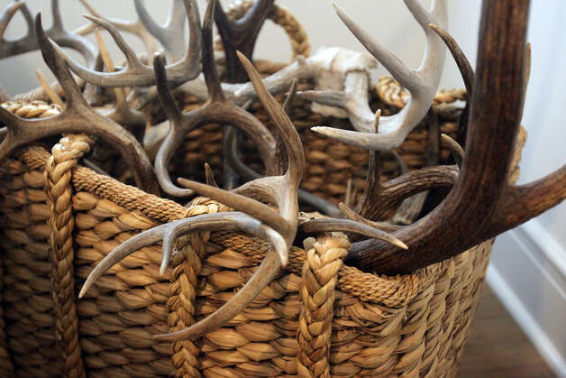 A basket full of antlers creates interest in a guest bedroom in the Monticello home of Freddie Delgado. (Wednesday April 11, 2012) John Davenport/SanAntonio Express-News Photo: John Davenport