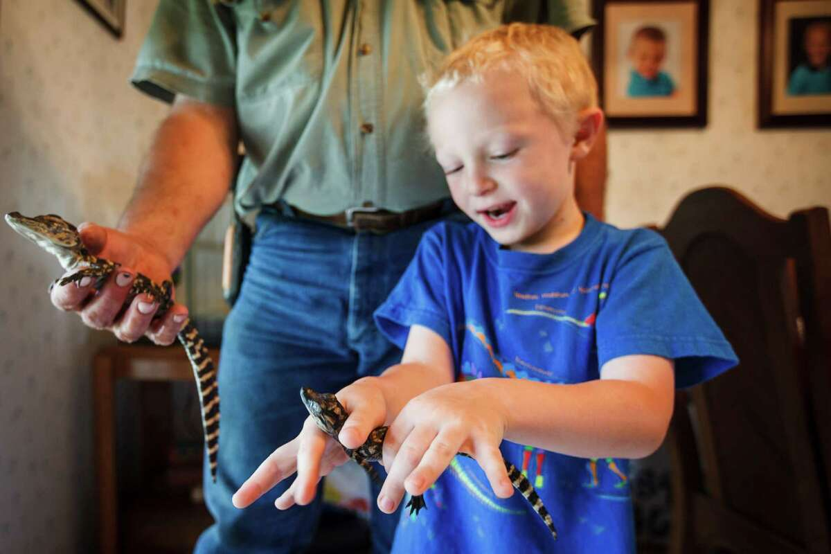Hunter Janik, 6, holds a baby 1-year-old alligator his grandfather Larry Janik (left) raises in the family's house at Janik Alligators, Thursday, April 12, 2012, in El Campo. Larry Janik is a veteran gator wrangler, the guy people call when a gator is found in a pond or on the freeway.