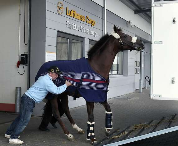A stable hand ushers a horse into a trailer before a Lufthansa flight out of Frankfurt. Photo: Hannelore Foerster, Bloomberg