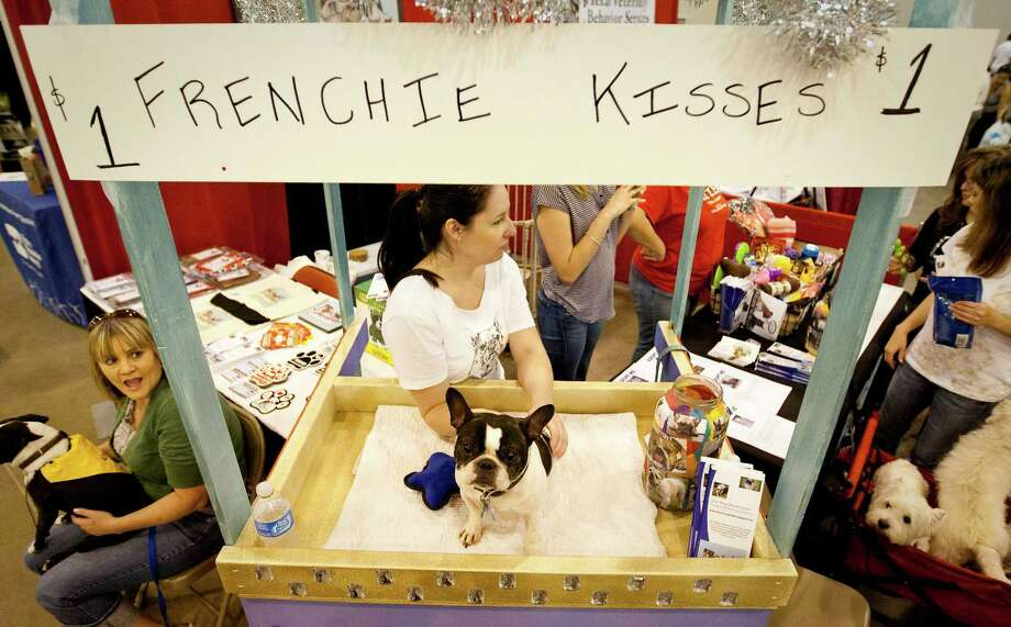 Izzy, a French Buldog, works a kissing booth to generate money for Short Mugs Rescue Squad, a dog rescue organization. Photo: Nick De La Torre, Houston Chronicle / © 2012  Houston Chronicle