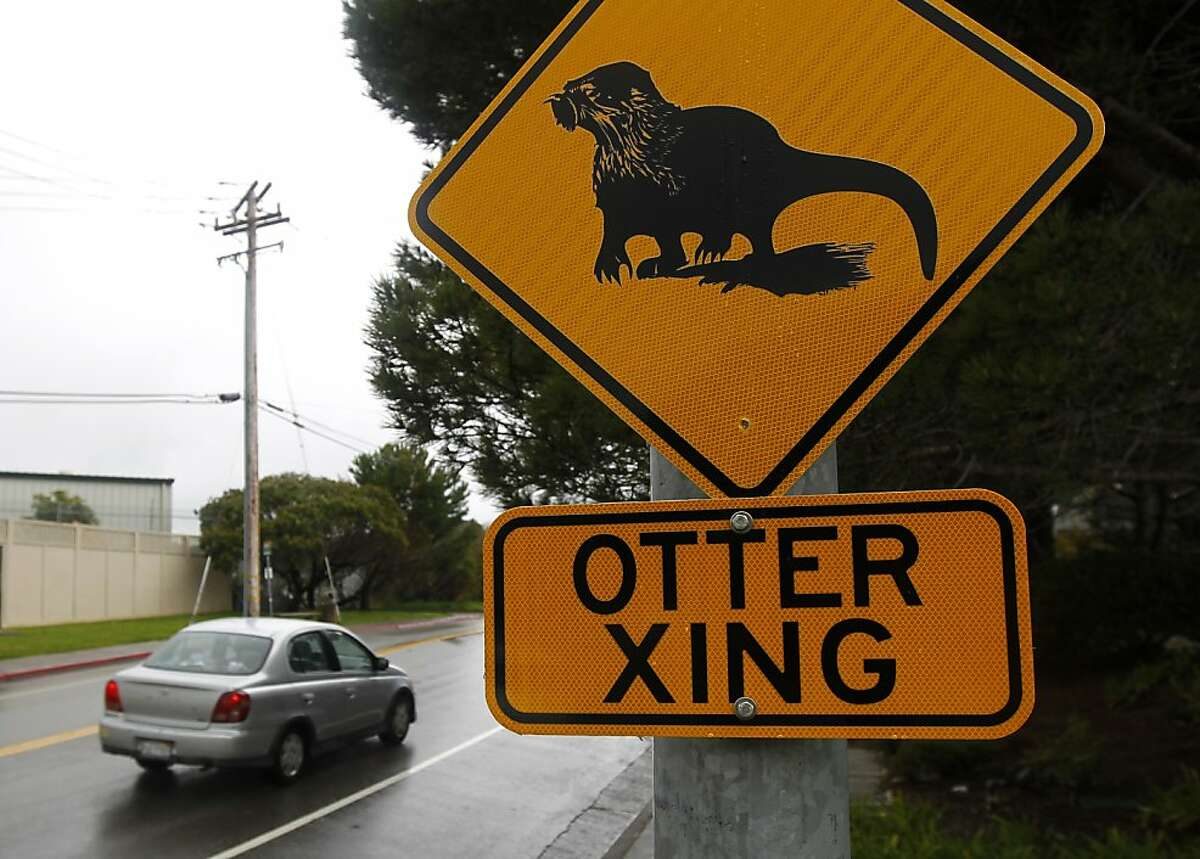 Traffic signs warn drivers to be aware of river otters crossing Lucky Drive in Larkspur, Calif. on Tuesday, April 10, 2012.