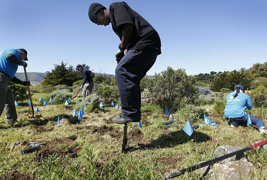 Charles Gulley digs a hole to replant native grasses during the annual Earth Day clean-up at Candlestick Point State Recreation Area in San Francisco, Calif. on Saturday, April 14, 2012. Photo: Paul Chinn, The Chronicle