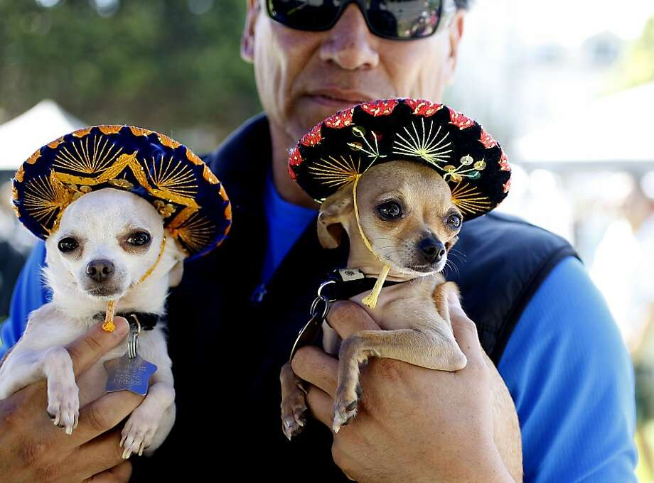 Michael Rios, center holds his dogs Hoochie, right and Pancho in their sombrero hats at the DogFest in a celebration of dogs and kids in benefit to SFUSD and McKinley Elementary School in Duboce Park in San Francisco, Calif. on April 14, 2012. Photo: Siana Hristova, The Chronicle