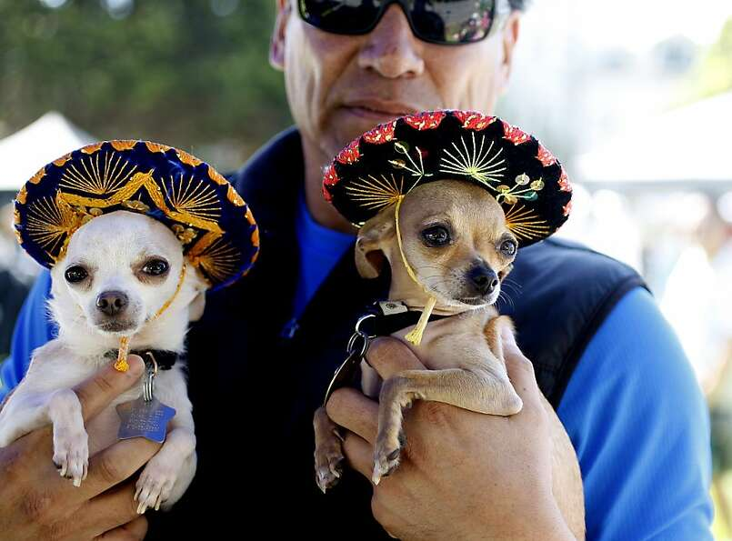 Michael Rios, center holds his dogs Hoochie, right and Pancho in their sombrero hats at the DogFest