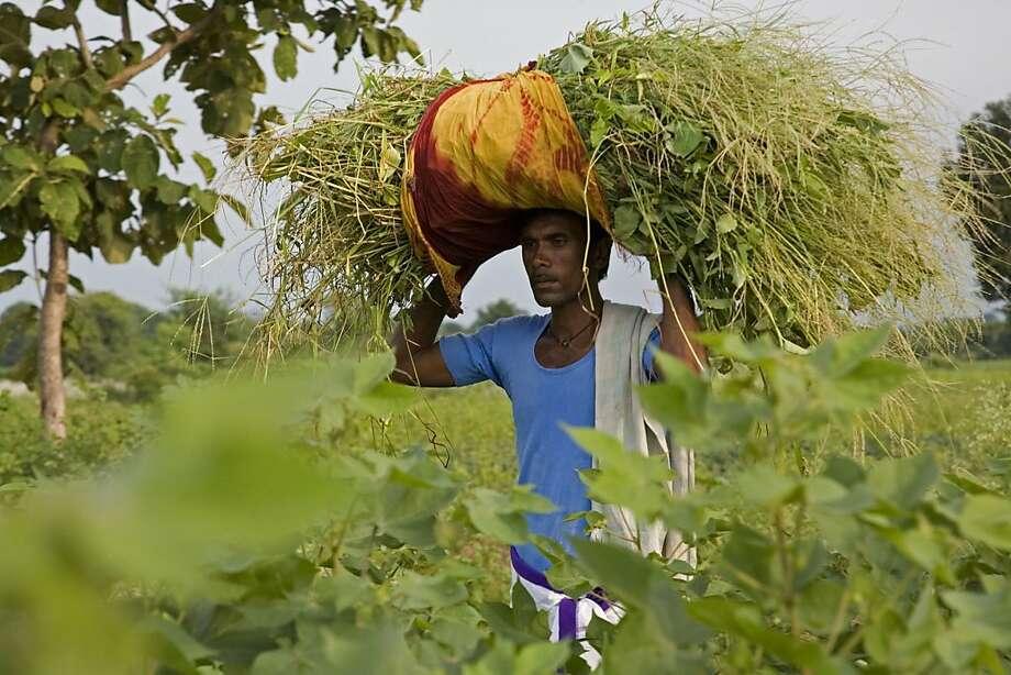 "Krishna, a farmer in rural India in Micha X. Peled's ""Bitter Seeds."" Photo: SFIFF"