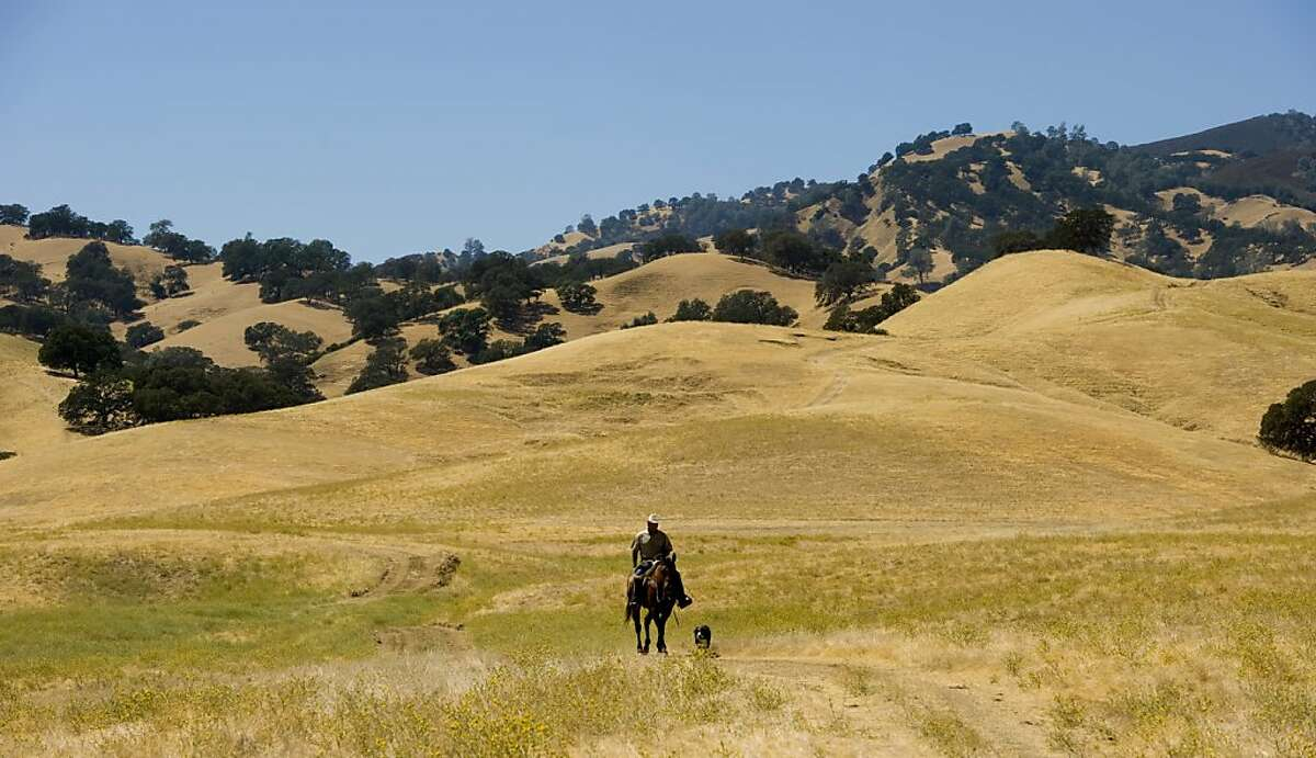 Scott Stone rides his horse on his cattle ranch in Yolo County CA, Wednesday Aug 17, 2011. Stone is a natural grass beef rancher in California He works hard to balance farming with preserving California's grass lands.