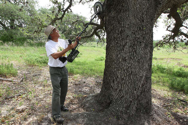 METRO -- Tejano historian and author Dan Arellano scans an old live oak tree for artifacts at a ranch in Atascosa County, Sunday, April 15, 2012.  Arellano and volunteers used metal detectors in an effort to find the site of the 1813 Battle of Medina. He said that the detectors could conceivably find musket round balls fired during the battle and embedded in the trunks of the surrounding trees. Jerry Lara/San Antonio Express-News Photo: JERRY LARA, San Antonio Express-News / © 2012 San Antonio Express-News