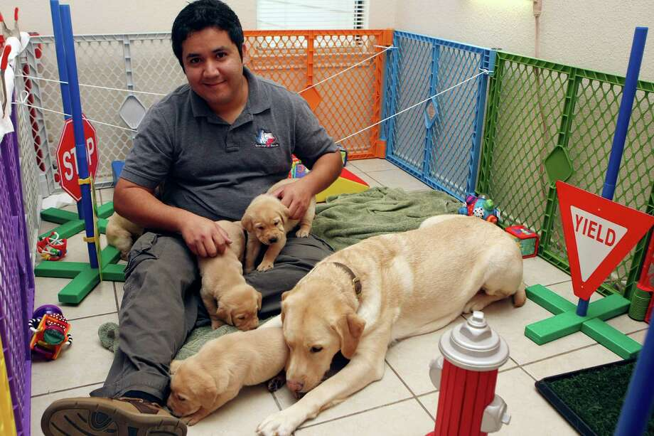 CONEXION:  Rene Rios works with Guide Dogs of Texas to train puppies from the time they are born until they are eight weeks old, to become guide dogs for the visually impaired. He is currently taking care of a litter of puppies from his home. After eight weeks they'll go with volunteer trainers.  Helen L. Montoya/Conexion Photo: HELEN L. MONTOYA, San Antonio Express-News / ©SAN ANTONIO EXPRESS-NEWS