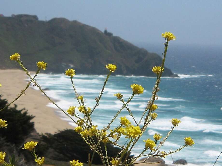 This time of year, after multiple rains, is the best time to enjoy the wildflowers blooming along coastal Monterey and Big Sur. Photo: Koleen Hamblin