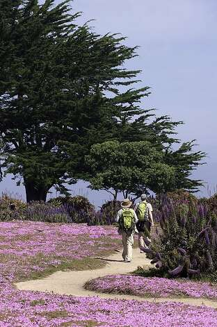 Late rains have made way for an abundance of wildflower blooms along the Central Coast. Take advantage of this scenic seasonal display by hiking one of the many parks and recreation areas along the coast. Photo: Kerrick James, Monterey Co. CVB