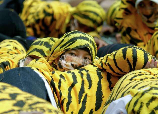 An Indonesian Greenpeace activist wearing a tiger suit looks up while participating in a protest to call for Sumatran tiger protection at the Forestry Ministry in Jakarta, Indonesia, Wednesday. Dozens of activists staged the protest demanding the government to investigate illegal practices such as cutting down natural forests conducted by pulp and paper companies that will lead to the destruction of the Sumatran tiger's habitat. Photo: AP / SL