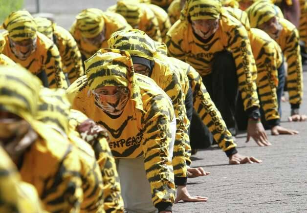Indonesian Greenpeace activists wearing tiger suits crawl during a protest calling for Sumatran tiger protection at the Forestry Ministry in Jakarta, Indonesia, Wednesday. Dozens of activists staged the protest demanding the government to investigate illegal practices such as cutting down natural forests conducted by pulp and paper companies that will lead to the destruction of the Sumatran tiger's habitat. Photo: AP / SL
