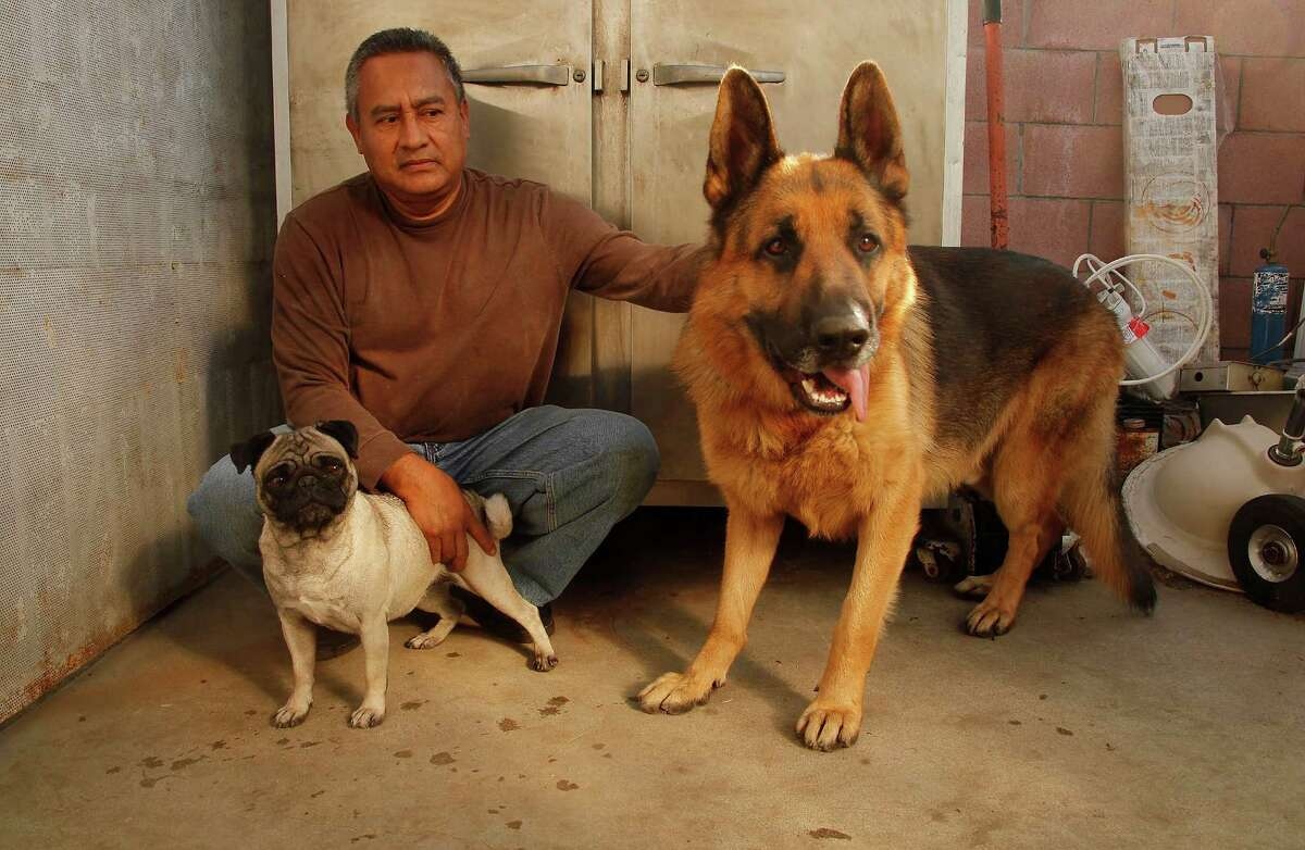 FILE - In this Nov. 16, 2011, file photo, shows Luis Calderon with his German shepherd, Buddy, right, and his wife's dog Lola, left, in El Monte, Calif. Calderon said if Buddy needed a vet, he would have to go through public services or use credit. A growing number of pet owners are buying insurance to protect themselves against unexpected treatments that can easily top several thousand dollars as veterinary care becomes more sophisticated.