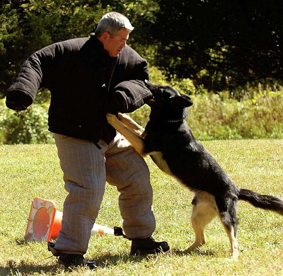 Gregg Scully takes a bite from New Milford police dog Onyx during a competition between CT K-9 handlers held yesterday in New Milford. 2007 file photo