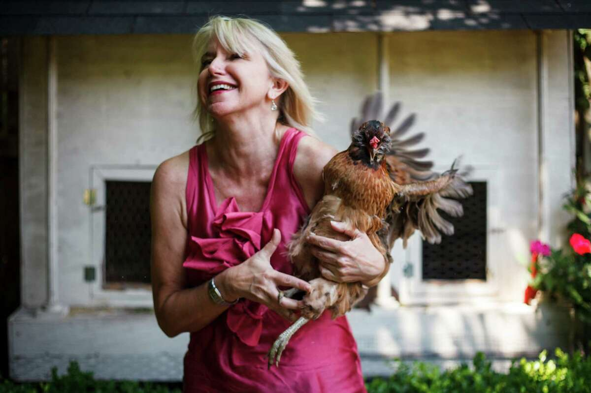 Aunt Connie, the chicken, decides she does not want to pose with Loren Raun of Bellaire. ( Michael Paulsen / Houston Chronicle )