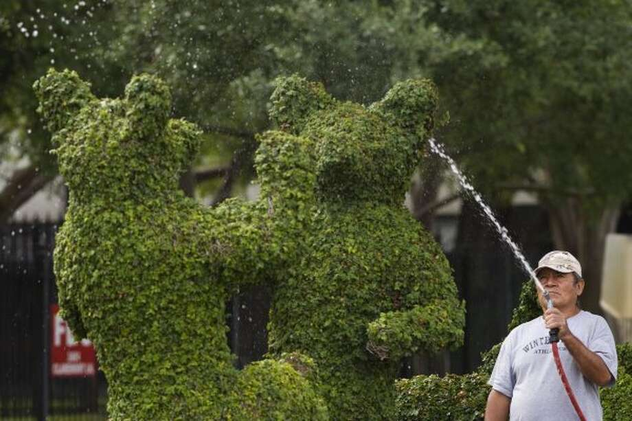 Pancho Romero waters the animal-shaped topiaries in the median next to the River Oaks Plant House Friday, April 20, 2012, in Houston. ( Brett Coomer / Houston Chronicle )  (© 2012 Houston Chronicle)