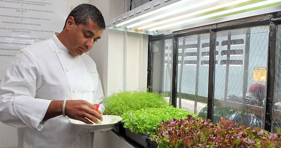 Chef-owner Michael Mina tends to his new kitchen garden at Michael Mina restaurant in San Francisco Tuesday April 17 2012. Photo: Lance Iversen, The Chronicle