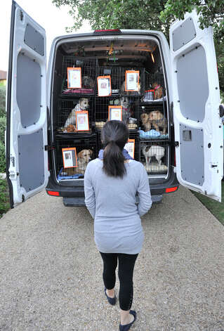 Veronica Wang looks over some of the dogs that are being transported to Nashua, New Hampshire by Alamo Rescue Friends. Photo: Robin Jerstad, Robin Jerstad/For The Express-News