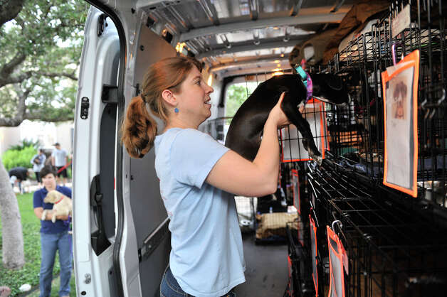 Virginia Davidson of Animal Rescue Friends (ARF) loads a dog that will be adopted after the journey to Nashua, New Hampshire. Photo: Robin Jerstad, Robin Jerstad/For The Express-News