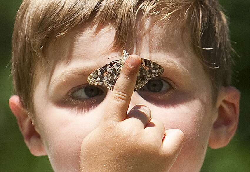 James Grace, 6, looks at a butterfly during the Changing Minds Foundation's