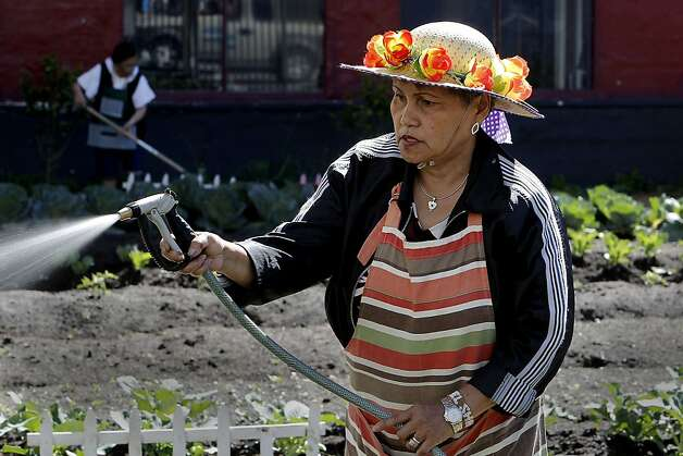 Volunteer Nella Manuel waters the vegetables at the Tenderloin People's Garden on the corner of McAllister and Larkin Streets, in San Francisco, Ca., on Friday April 20, 2012. The craze over planting kale and carrots in your backyard has taken root in San Francisco in a big way so big, in fact, it extends way beyond the backyard. Aspiring urban farmers sit on waiting lists for two years to use public plots of land. Starting a neighborhood garden from scratch means tangling with potentially seven agencies. Although the city changed zoning rules last year to allow gardens, its approach to urban agriculture could be simpler and reap better benefits, suggests a report to be released Monday by the San Francisco Planning and Urban Research Association. Supervisor David Chiu plans to introduce legislation to simplify the process. Photo: Michael Macor, The Chronicle