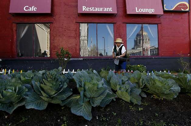 Volunteer Clemencia Paclibar cultivates the earth against a row of cabbage at the Tenderloin People's Garden near City Hall, on the corner of McAllister and Larkin Streets, in San Francisco, Ca., on Friday April 20, 2012. The craze over planting kale and carrots in your backyard has taken root in San Francisco in a big way so big, in fact, it extends way beyond the backyard. Aspiring urban farmers sit on waiting lists for two years to use public plots of land. Starting a neighborhood garden from scratch means tangling with potentially seven agencies. Although the city changed zoning rules last year to allow gardens, its approach to urban agriculture could be simpler and reap better benefits, suggests a report to be released Monday by the San Francisco Planning and Urban Research Association. Supervisor David Chiu plans to introduce legislation to simplify the process. Photo: Michael Macor, The Chronicle