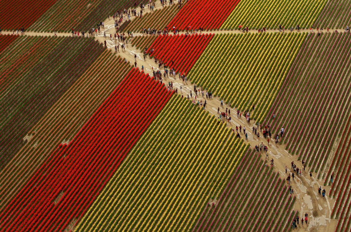 Visitors walk through tulip fields during the Skagit Valley Tulip Festival near La Conner on Sunday, Apr. 22, 2012.