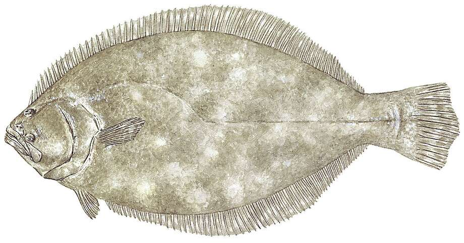 Flounder: Limit is five per day except Nov. 1-30 when limit is two per day; 14-inch length minimum.