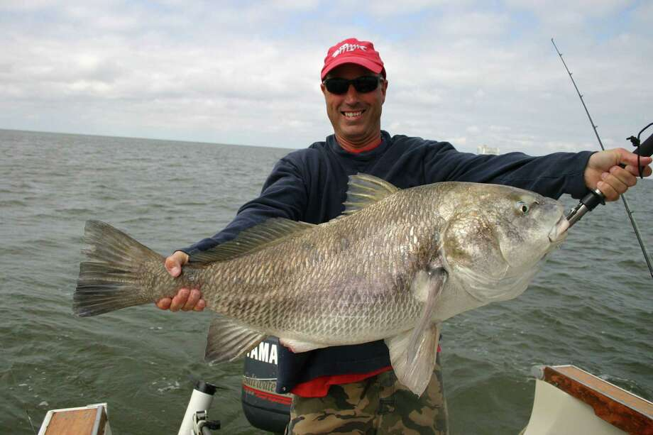 Mike Sellers prepares to release typical Galveston Bay black drum. Photo: Joe Doggett, Houston Chronicle / Houston Chronicle