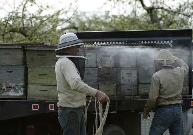 "Gary Rulison, left with Ben Rulison of the Rulison Honey Farms ""smoke"" bees to be used for pollination of the Indian Ladder apple orchard in Altamont, N.Y. April 18, 2012.  (Skip Dickstein/Times Union) Photo: Skip Dickstein / 00017266A"